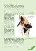 Fledermausbroschüre - BUND-Kreisgruppe Plön - Seite 7
