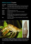 Crayfish and River Users - Environment Agency - Page 2