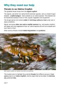 Crayfish and River Users - Environment Agency - Page 4