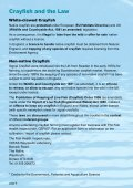 Crayfish and River Users - Environment Agency - Page 6