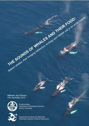 THE SOUNDS OF WHALES AND THEIR FOOD: