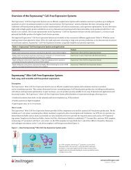 Overview of the Expressway™ Cell-Free Expression ... - Invitrogen