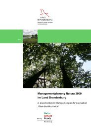 Managementplanung Natura 2000 im Land Brandenburg