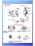 AULA 5 - Page 4