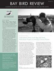 BAY BIRD REVIEW - San Francisco Bay Bird Observatory