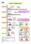 YMC-Triartシリーズ逆相カラムの分離選択性比較 - Page 3