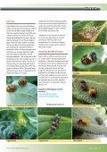 Keeping Trout - Backyard Magazines - Page 5