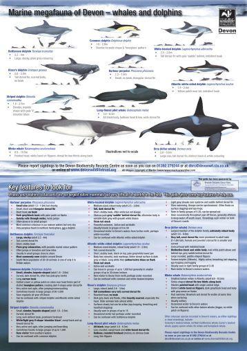 Marine Megafauna Guide - Devon Wildlife Trust