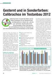 Gesternt und in Sonderfarben: Calibrachoa im ... - Arbeitskreis Beet