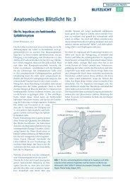 Anatomisches Blitzlicht Nr. 3 - Qualitative Viszerale Osteopathie