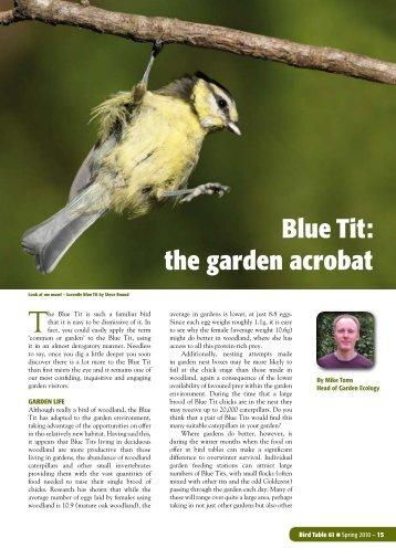 Bird Table 61 - 2010 - Blue Tit article