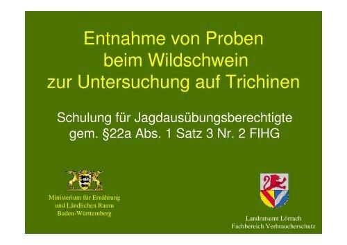Entnahme von Proben beim Wildschwein zur ... - Landkreis Lörrach