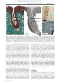 Electroreception in the Guiana dolphin (Sotalia guianensis) - Page 4