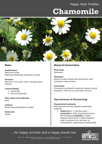 Chamomile flower (Matricaria recutita) - Happiness Is