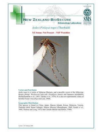 Aedes (Finlaya) togoi (Theobald)