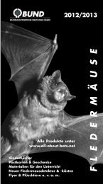 fledermäuse 2012/2013 - All about Bats