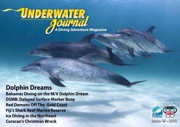 Dolphin Dreams - Stingray Divers