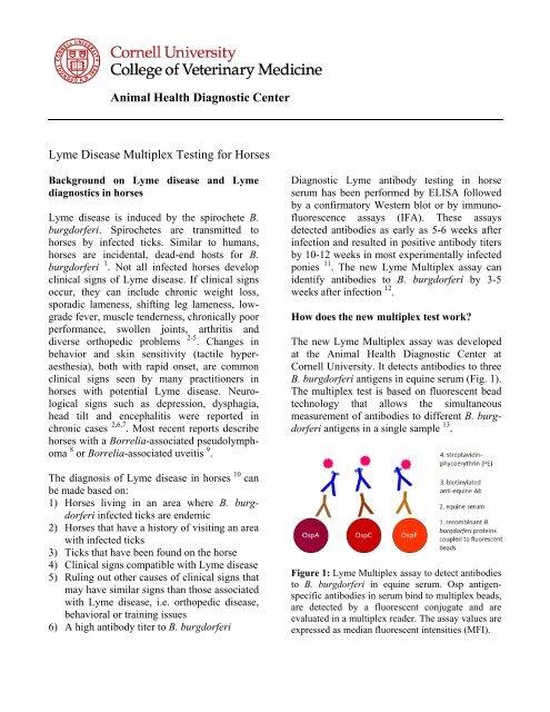 Lyme Disease Multiplex Testing for Horses - AHDC - Cornell