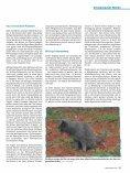 Wenn die Nieren streiken von Dr. med. vet. Claudia Möller ... - caet.ch - Seite 2