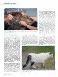 Wenn die Nieren streiken von Dr. med. vet. Claudia Möller ... - caet.ch - Seite 5