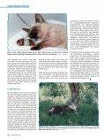 Wenn die Nieren streiken von Dr. med. vet. Claudia Möller ... - caet.ch - Seite 7