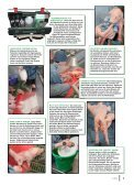 Versorgung neugeborener Ferkel - Seite 2