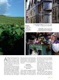 Explosionen am Gaumen - Champagne - Seite 2