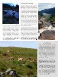 AVES ACUÁTICAS DE INVERNADA - Bizkaia 21 - Page 6