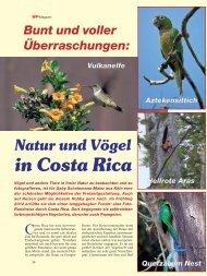 Der Artikel als PDF (1,25 MB - Birds Online