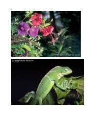 Wo wachsen Regenwälder? - WWF Schweiz