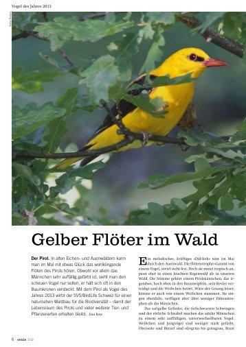 Gelber Flöter im Wald - natur4ort.ch