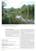Gelber Flöter im Wald - natur4ort.ch - Seite 3