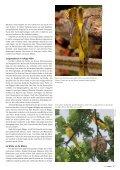 Gelber Flöter im Wald - natur4ort.ch - Seite 4