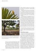 Gelber Flöter im Wald - natur4ort.ch - Seite 5