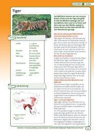 Tiger - OroVerde