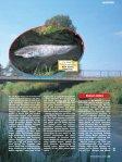 Die Wörnitz bei Oettingen - Raubfisch - Seite 2