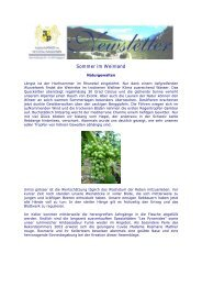 Newsletter 2005 4 - Mathier