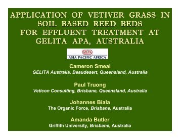 Soil Based Reed Beds