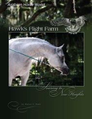 Soaring to New Heights - Hawk's Flight Farm Arabian Horses