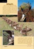 nagyobb modellje, amely egyúttal az Észak-Ameri - Magasles - Page 6