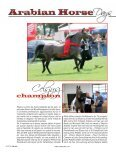 Arabian Horse - Tutto Arabi Magazine - home - Page 5