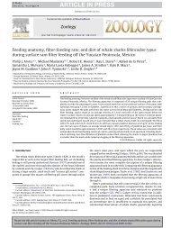Read Zoology's paper on shark feeding - Washington Post