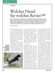 Teil 14: Apportierhunde (Retriever) - Weidwerk
