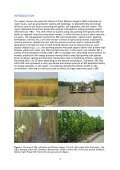 Quantifying environmental effects of Short Rotation Coppice (SRC ... - Page 3