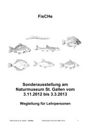 FisCHe Sonderausstellung am Naturmuseum St. Gallen vom 3.11 ...