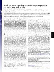 T cell receptor signaling controls Foxp3 expression via PI3K, Akt ...