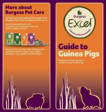 ECXEL_Guide%20to%20Guinea%20Pigs