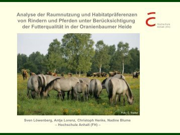 Analyse der Raumnutzung und Habitatpräferenzen von Rindern und ...