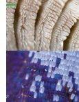 Surface - Die Innovationsgesellschaft - Seite 6