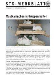 Mastkaninchen in Gruppen halten - Schweizer Tierschutz STS